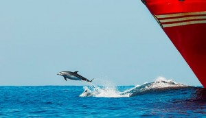 DOLPHINS, FLEAS AND CHOPPY SEAS Image
